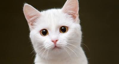 Търся бяло женско коте