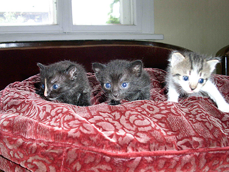 четири котета