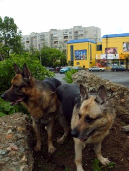 Арес и Клоуи