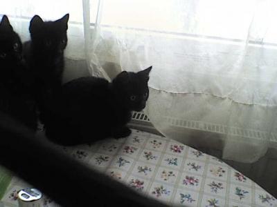 мъжки котета