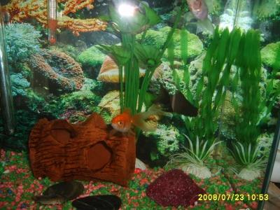 Моите рибки