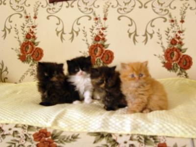 4 Персийчета..