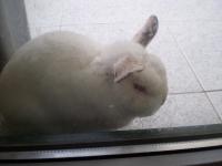Подарявам заек.