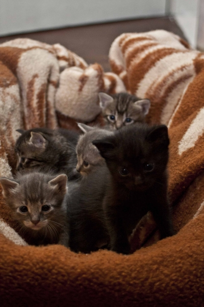Подаряваме 4 прекрасни котета
