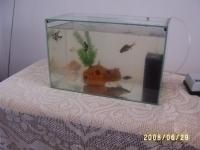 брат ми и двата ни аквариума