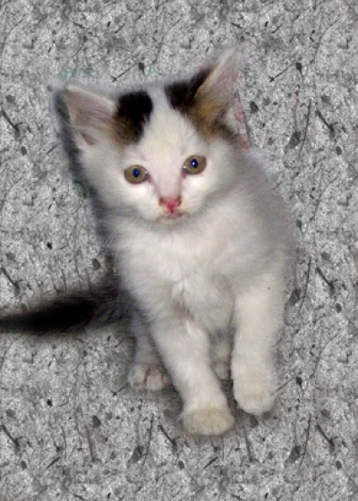 Подарявам котета на 1 месец, София