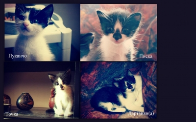 Четири котета търсят дом