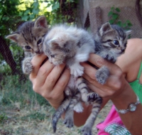 Стара Загора. Подаряват се три малки котенца