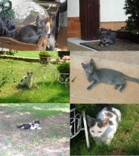 Мишо и приятели