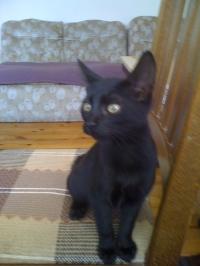 Подарявам черно женско коте! (София)