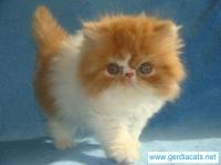 Търся някой да ми подари малко котенце