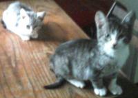 2 котета