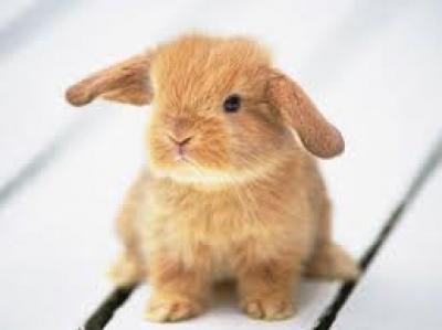 Подари ми зайче!