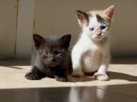 котенца на 50 дни търсят дом