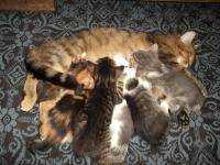 Шест малки котета