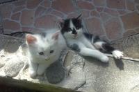 Малки котенца