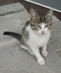 малки сладки котета