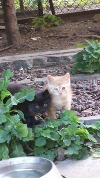 Две малки сладки котета