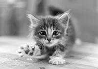 Подарявам шест малки котета