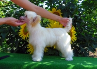 Китайско качулато куче-облечено