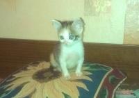 Подарявам красиво и гальовно котенце