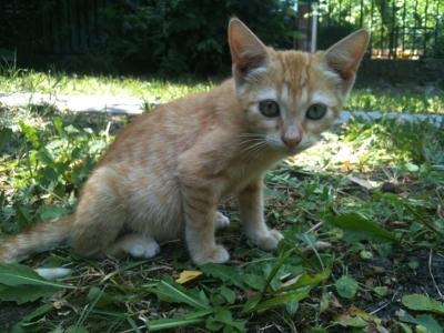 Котенцата на Лизи