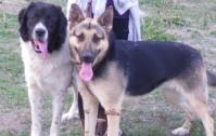 Кученца за хора със сърца :)