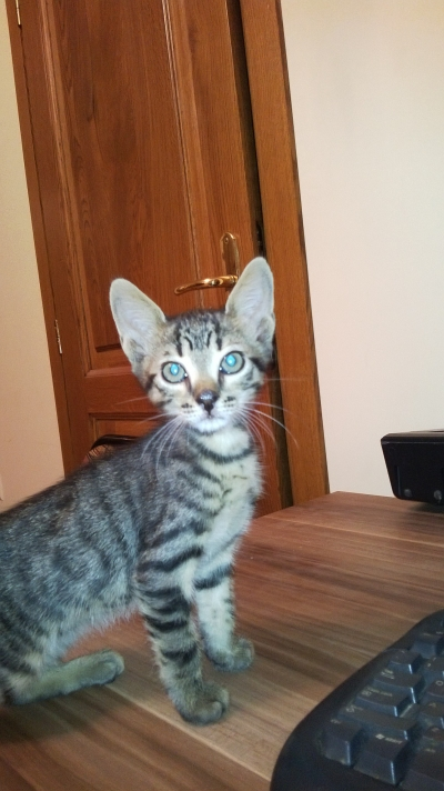 Гальовни котенца тръсят своя нов дом