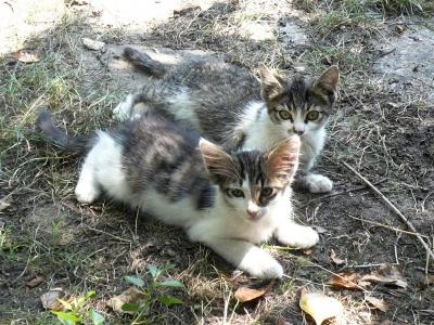 котета