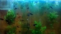 Аквариум и рибки