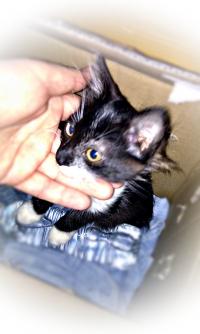 Подарявам Малко Сладко Котенце 3месеца