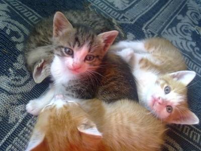 Малки сладки котенца си търсят дом