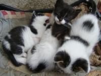 Подаряват са четири малки котета