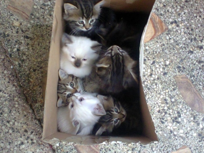 Седем малки котета търсят свой стопанин