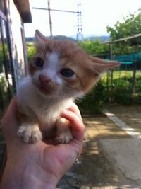 Подарявам котенца от Габрово