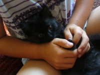 две черни котета