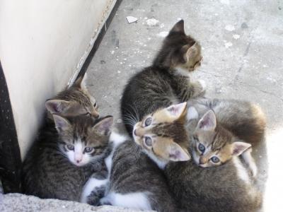 Сладички малки котенца