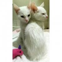 Джина и Рони
