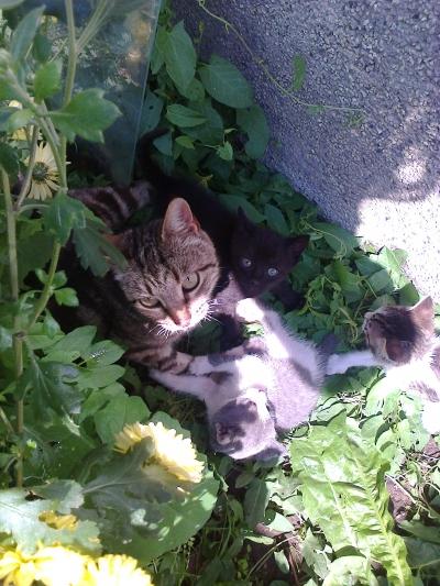 Подарявам котета- все още нямат имена- Спешно!