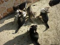Котета търсят стопани