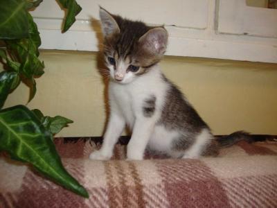 Пет малки сладки котетя