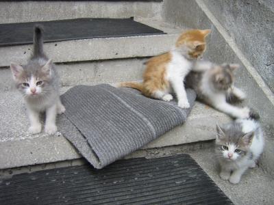 Четири малки котета