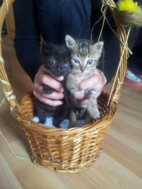 Две малки котета