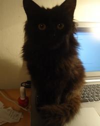 Кити(отскоро)