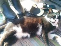 3 котенца