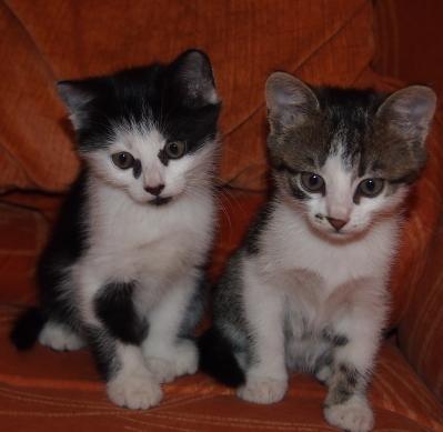 сладки малки котенца търсят своя дом
