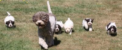 Професионално обучени кучета за трюфели