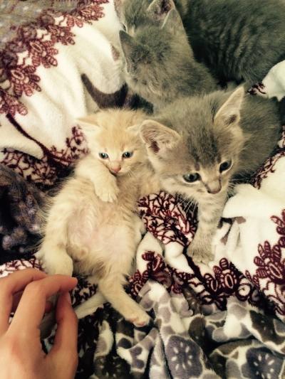 Ангорски котета на 1 месец