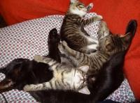 Подаряваме 3 котета