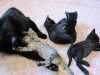 Подарявам черни котета